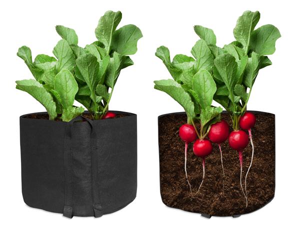Planted Phat Sacks