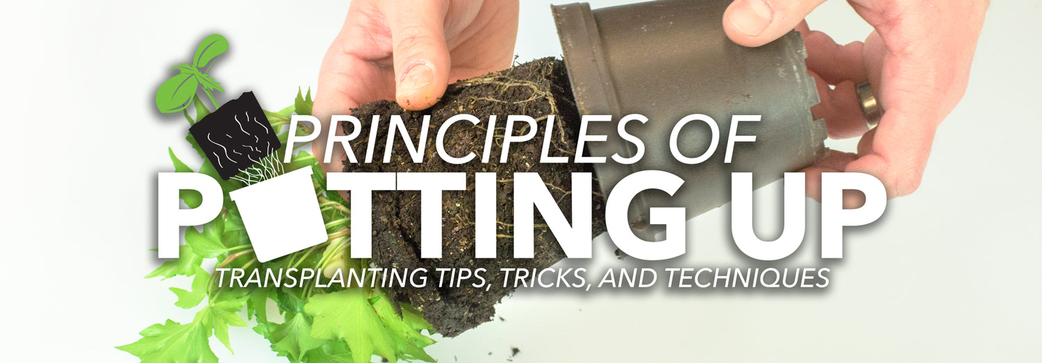 Learn How to Transplant Seedlings and Plants Step By Step