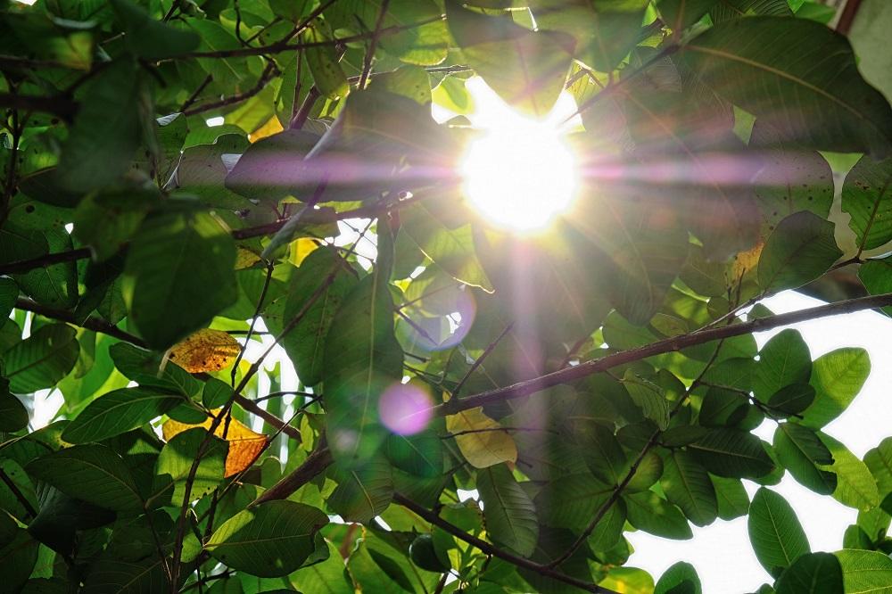 Intense Sunlight on Plants