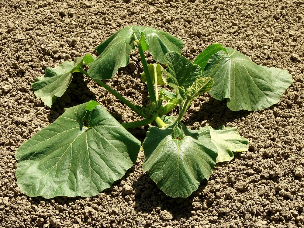 Plants With Transplant Shock
